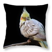 Are You Looking At Me Throw Pillow