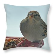 Are You Sure You Want This Seed? Throw Pillow