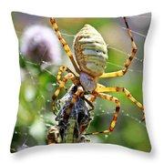 Argiope Spider And Grasshopper Vertical Throw Pillow