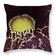 Aristolochia - Dutchmans Pipe Throw Pillow