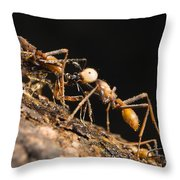 Army Ant Carrying Cricket La Selva Throw Pillow