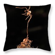 Army Ants Building Bivouac Throw Pillow