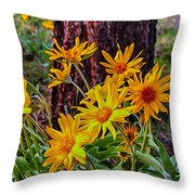 Arrowleaf Balsamroot Throw Pillow by Omaste Witkowski