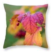 Arrowwood Leaf - Featured 3 Throw Pillow