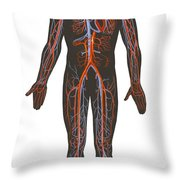 Arteries And Veins Of The Human Body Throw Pillow