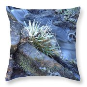 Artistry In Ice 19 Throw Pillow