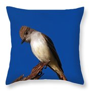 Ash-throated Flycatcher Throw Pillow