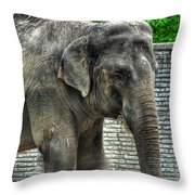 Asian Elephant  0a Throw Pillow
