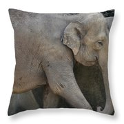 Asian Elephant Throw Pillow