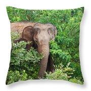 Asian Elephant  Elephas Maximus Throw Pillow