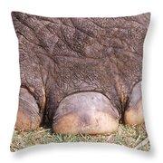 Asian Elephant Foot Throw Pillow