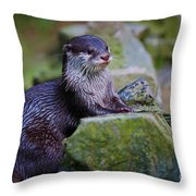 Asian Small Clawed Otter Throw Pillow