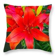 Asiatic Hybrid Lily Throw Pillow