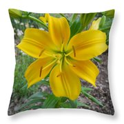 Asiatic Lily 2 Throw Pillow