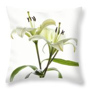 Asiatic Lily Flowers Against White Throw Pillow