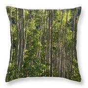 Aspen Along Independence Pass  Throw Pillow