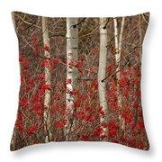 Aspen And Berries Throw Pillow