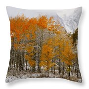 Aspen Grove Along The Snake River Grand Teton National Park Throw Pillow