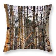Aspen Patterns 14438 Throw Pillow