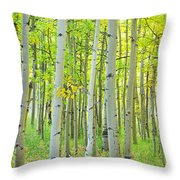Aspen Tree Forest Autumn Time  Throw Pillow