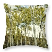 Aspen Trees In Spring  Throw Pillow