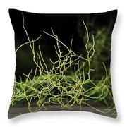 Aspergillus Niger Fungus Sem Throw Pillow