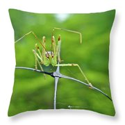 Assassin Bug Nymph - Reduviidae Throw Pillow