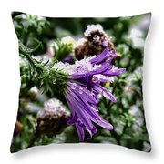 Aster In First Snow Fall 2- Throw Pillow