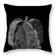 Astrophytum Cactus Throw Pillow