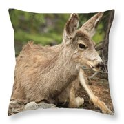 At Rest In The Rockies Throw Pillow