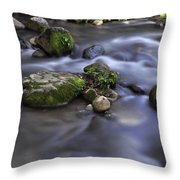 At The Banias River 1 Throw Pillow