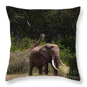 At The Foot Of Kilimanjaro Throw Pillow