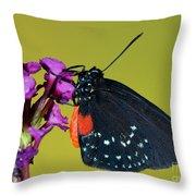 Atala Butterfly Throw Pillow