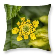 Atlanta Botanical Garden Flowers V9 Throw Pillow