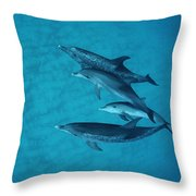 Atlantic Spotted Dolphin Adults Throw Pillow
