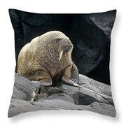 Atlantic Walrus Bull On Rocky Shore Throw Pillow