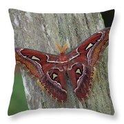 Atlas Moth Portrait Asia Throw Pillow