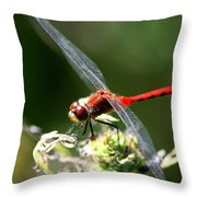 August Dragonfly  Throw Pillow