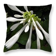 August Lily Throw Pillow
