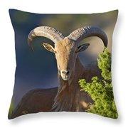 Auodad Ram On Watch Throw Pillow