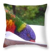 Australia - One Wet Lorikeet Feeding Throw Pillow