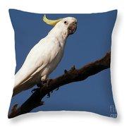 Australian Bird Throw Pillow