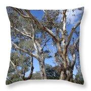 Australian Native Tree 12 Throw Pillow