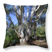 Australian Native Tree 5 Throw Pillow