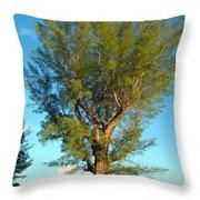 Australian Pine At Sundown Throw Pillow