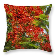 Australian Poinciana Tree Throw Pillow