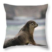 Australian Sea Lion On Beach Kangaroo Throw Pillow