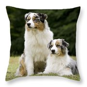 Australian Shepherd Dogs Throw Pillow