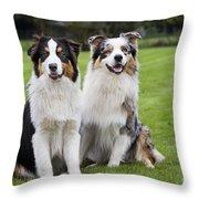 Australian Shepherds Throw Pillow