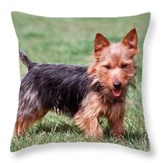 Australian Terrier Dog Throw Pillow